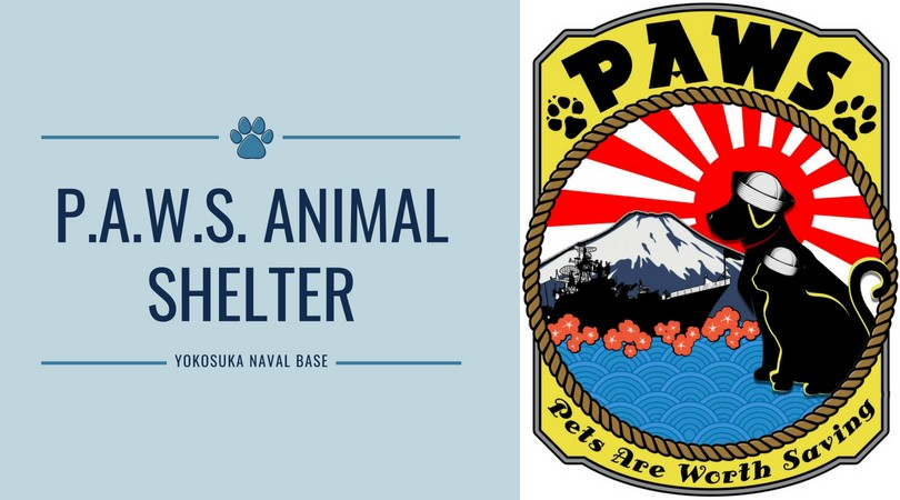 pets are worth saving yokosuka naval base kanagawa non-profit volunteer community animals metropolis japan