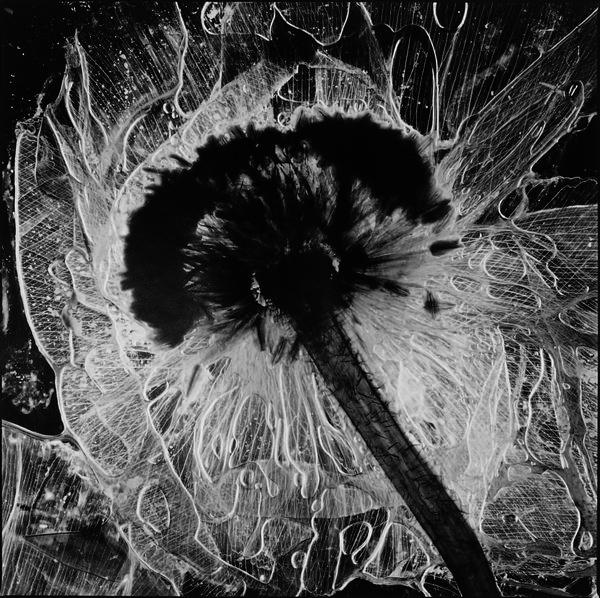 Flowers Eternal Life