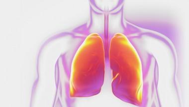 Respirology, Lung and Chest Physicians Meet