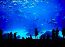Aquarium, Stramash, Sea Day, July, Solamachi, Tokyo Skytree, Skytree, Sumida Aquarium, Art Aquarium, exhibition, Churaumi Aquarium, Toba Aquarium, Sunshine Aquarium, Nagoya, Port of Nagoya,