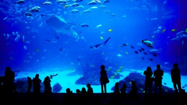 Top 7 Aquariums to Celebrate Sea Day