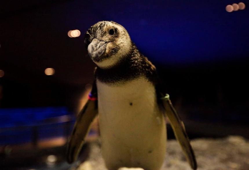 Sumida Aquarium, aquarium, Sumida, Tokyo Skytree, penguin, Sea Day, Solamachi, Tokyo Skytree Solamachi, Skytree
