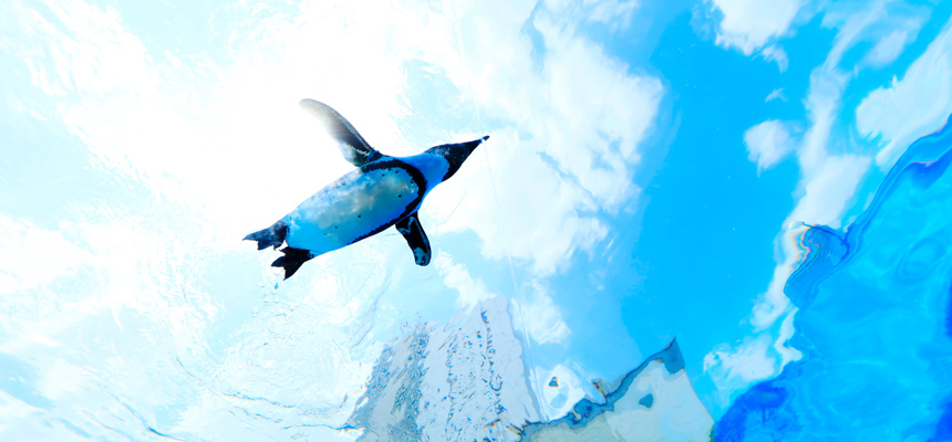 Sunshine Aquarium, aquarium, Stramash, penguin, Sea Day