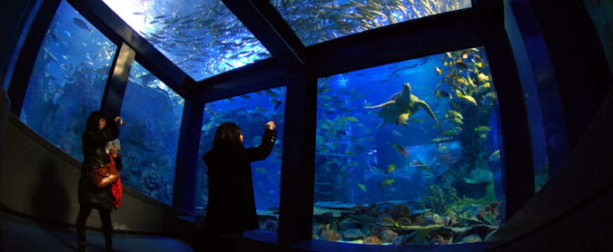 Toba Aquarium, aquarium, Sea Day, Mie, Stramash, fish