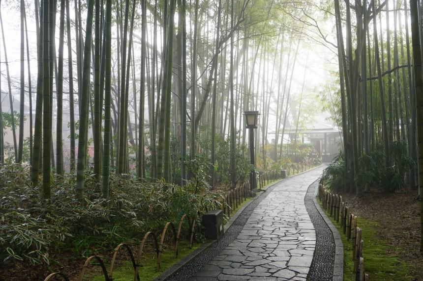 strolling in shuzenji
