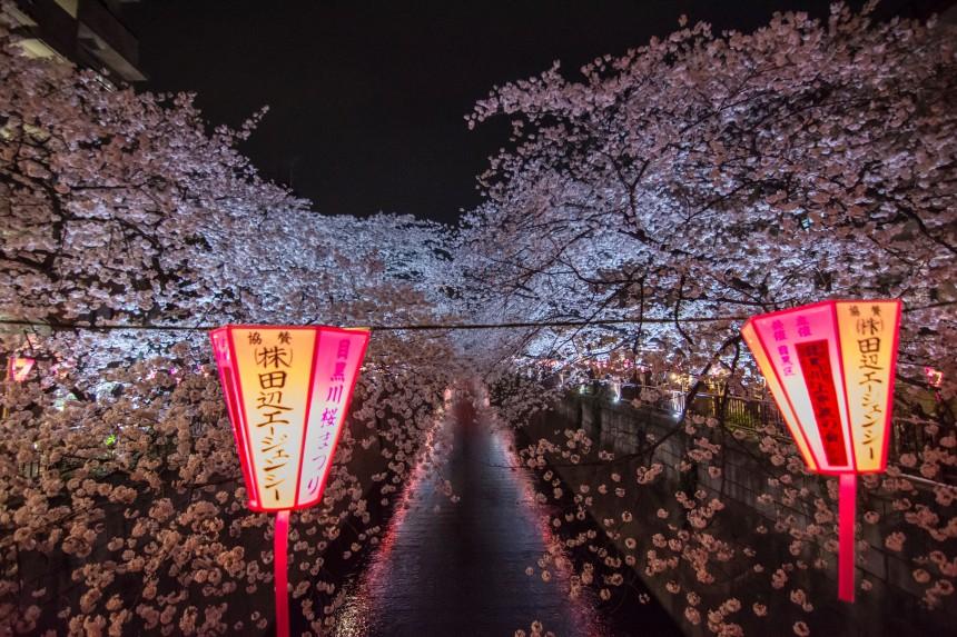 Meguro River hello hanami sakura hanami festival tokyo nakameguro lanterns