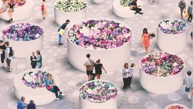 Hibiya Blossom 2020