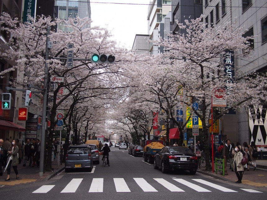 Yaesu Sakura Dori hanami viewing nihonbashi
