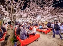 coronavirus outbreak Is Hanami Still Happening in 2020? Coronavirus affects Japan's favorite spring ritual