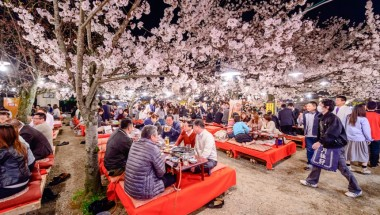 Is Hanami Still Happening in 2020?
