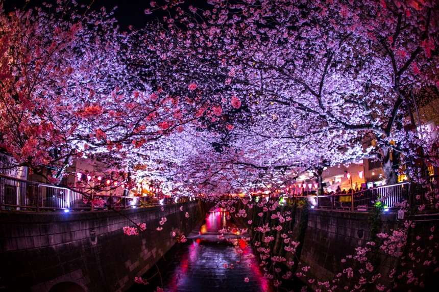 Is Hanami Still Happening in 2020? Coronavirus affects Japan's favorite spring ritua