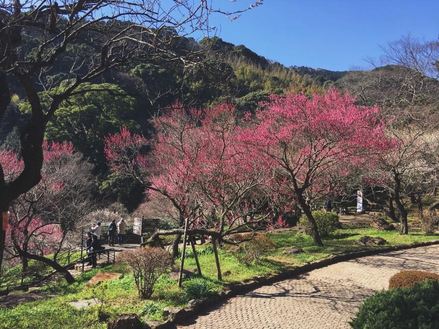 Atami Travel japan onsen izu peninsula baien plum garden atami ropeway hihokan museum